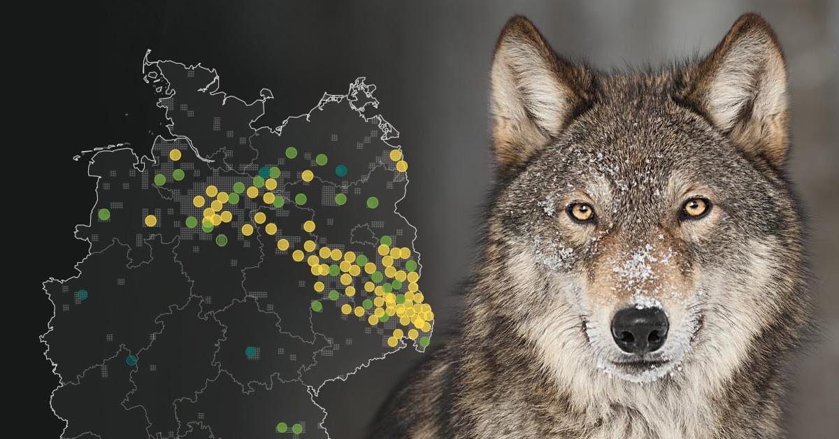 INTERAKTIV Wölfe in Deutschland